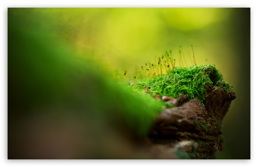 Moss Macro HD wallpaper for Wide 16:10 5:3 Widescreen WHXGA WQXGA WUXGA WXGA WGA ; HD 16:9 High Definition WQHD QWXGA 1080p 900p 720p QHD nHD ; Standard 4:3 5:4 3:2 Fullscreen UXGA XGA SVGA QSXGA SXGA DVGA HVGA HQVGA devices ( Apple PowerBook G4 iPhone 4 3G 3GS iPod Touch ) ; Tablet 1:1 ; iPad 1/2/Mini ; Mobile 4:3 5:3 3:2 16:9 5:4 - UXGA XGA SVGA WGA DVGA HVGA HQVGA devices ( Apple PowerBook G4 iPhone 4 3G 3GS iPod Touch ) WQHD QWXGA 1080p 900p 720p QHD nHD QSXGA SXGA ;