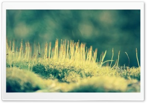Moss Macro HD Wide Wallpaper for Widescreen