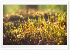 Moss, Morning HD Wide Wallpaper for Widescreen