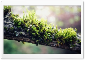 Moss On Branch HD Wide Wallpaper for 4K UHD Widescreen desktop & smartphone