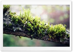 Moss On Branch Ultra HD Wallpaper for 4K UHD Widescreen desktop, tablet & smartphone