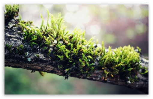 Moss On Branch HD wallpaper for Wide 16:10 5:3 Widescreen WHXGA WQXGA WUXGA WXGA WGA ; HD 16:9 High Definition WQHD QWXGA 1080p 900p 720p QHD nHD ; Standard 4:3 5:4 3:2 Fullscreen UXGA XGA SVGA QSXGA SXGA DVGA HVGA HQVGA devices ( Apple PowerBook G4 iPhone 4 3G 3GS iPod Touch ) ; Tablet 1:1 ; iPad 1/2/Mini ; Mobile 4:3 5:3 3:2 16:9 5:4 - UXGA XGA SVGA WGA DVGA HVGA HQVGA devices ( Apple PowerBook G4 iPhone 4 3G 3GS iPod Touch ) WQHD QWXGA 1080p 900p 720p QHD nHD QSXGA SXGA ;