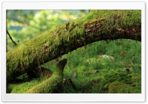 Moss Plant HD Wide Wallpaper for Widescreen