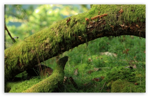 Moss Plant ❤ 4K UHD Wallpaper for Wide 16:10 5:3 Widescreen WHXGA WQXGA WUXGA WXGA WGA ; 4K UHD 16:9 Ultra High Definition 2160p 1440p 1080p 900p 720p ; Standard 4:3 5:4 3:2 Fullscreen UXGA XGA SVGA QSXGA SXGA DVGA HVGA HQVGA ( Apple PowerBook G4 iPhone 4 3G 3GS iPod Touch ) ; Tablet 1:1 ; iPad 1/2/Mini ; Mobile 4:3 5:3 3:2 16:9 5:4 - UXGA XGA SVGA WGA DVGA HVGA HQVGA ( Apple PowerBook G4 iPhone 4 3G 3GS iPod Touch ) 2160p 1440p 1080p 900p 720p QSXGA SXGA ;