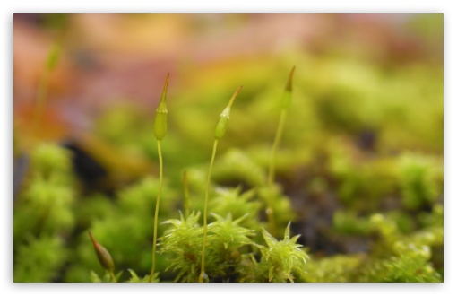 Moss Seeds HD wallpaper for Wide 16:10 5:3 Widescreen WHXGA WQXGA WUXGA WXGA WGA ; HD 16:9 High Definition WQHD QWXGA 1080p 900p 720p QHD nHD ; Standard 4:3 5:4 3:2 Fullscreen UXGA XGA SVGA QSXGA SXGA DVGA HVGA HQVGA devices ( Apple PowerBook G4 iPhone 4 3G 3GS iPod Touch ) ; Tablet 1:1 ; iPad 1/2/Mini ; Mobile 4:3 5:3 3:2 16:9 5:4 - UXGA XGA SVGA WGA DVGA HVGA HQVGA devices ( Apple PowerBook G4 iPhone 4 3G 3GS iPod Touch ) WQHD QWXGA 1080p 900p 720p QHD nHD QSXGA SXGA ;