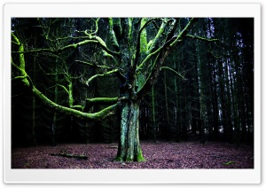 Moss Tree HD Wide Wallpaper for Widescreen