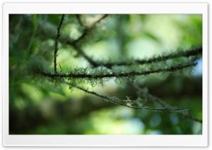 Mossy Branches Ultra HD Wallpaper for 4K UHD Widescreen desktop, tablet & smartphone