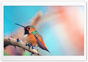 Most Beautiful Birds HD Wide Wallpaper for Widescreen