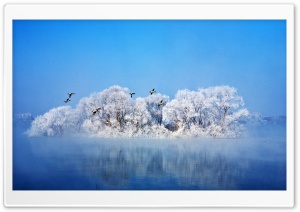 Most Beautiful Winter HD Wide Wallpaper for Widescreen