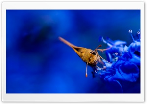 Moth, Blue Flowers HD Wide Wallpaper for Widescreen