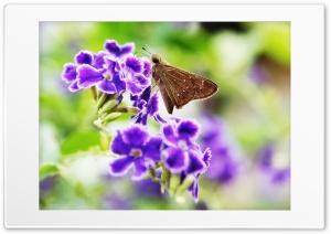Moth  violet Ultra HD Wallpaper for 4K UHD Widescreen desktop, tablet & smartphone