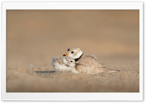 Mother Bird and Baby HD Wide Wallpaper for Widescreen