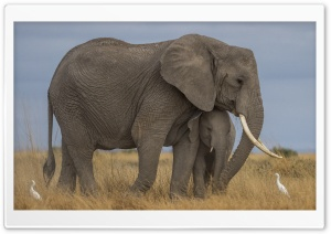 Mother Elephant and Baby, Love Ultra HD Wallpaper for 4K UHD Widescreen desktop, tablet & smartphone