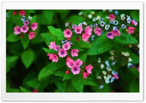 Mother&#039;s Day Flowers HD Wide Wallpaper for Widescreen