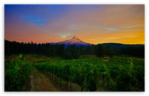 Mount Hood Landscape ❤ 4K UHD Wallpaper for Wide 16:10 5:3 Widescreen WHXGA WQXGA WUXGA WXGA WGA ; 4K UHD 16:9 Ultra High Definition 2160p 1440p 1080p 900p 720p ; UHD 16:9 2160p 1440p 1080p 900p 720p ; Standard 4:3 5:4 3:2 Fullscreen UXGA XGA SVGA QSXGA SXGA DVGA HVGA HQVGA ( Apple PowerBook G4 iPhone 4 3G 3GS iPod Touch ) ; Tablet 1:1 ; iPad 1/2/Mini ; Mobile 4:3 5:3 3:2 16:9 5:4 - UXGA XGA SVGA WGA DVGA HVGA HQVGA ( Apple PowerBook G4 iPhone 4 3G 3GS iPod Touch ) 2160p 1440p 1080p 900p 720p QSXGA SXGA ;