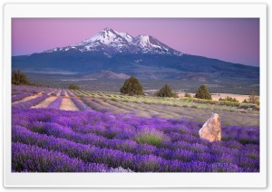 Mount Shasta, California HD Wide Wallpaper for Widescreen