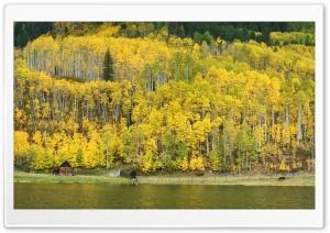 Mountain, Aspen Forest, Colorado, Autumn Landscape Panoramic View Ultra HD Wallpaper for 4K UHD Widescreen desktop, tablet & smartphone