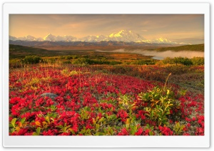 Mountain Flower Field HD Wide Wallpaper for Widescreen