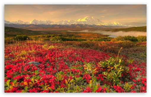 Mountain Flower Field HD wallpaper for Wide 16:10 5:3 Widescreen WHXGA WQXGA WUXGA WXGA WGA ; HD 16:9 High Definition WQHD QWXGA 1080p 900p 720p QHD nHD ; Standard 4:3 5:4 3:2 Fullscreen UXGA XGA SVGA QSXGA SXGA DVGA HVGA HQVGA devices ( Apple PowerBook G4 iPhone 4 3G 3GS iPod Touch ) ; Tablet 1:1 ; iPad 1/2/Mini ; Mobile 4:3 5:3 3:2 16:9 5:4 - UXGA XGA SVGA WGA DVGA HVGA HQVGA devices ( Apple PowerBook G4 iPhone 4 3G 3GS iPod Touch ) WQHD QWXGA 1080p 900p 720p QHD nHD QSXGA SXGA ;