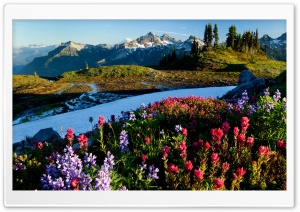 Mountain Flowers HD Wide Wallpaper for Widescreen