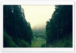 Mountain Forest Ultra HD Wallpaper for 4K UHD Widescreen desktop, tablet & smartphone