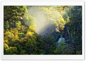 Mountain Forest HD Wide Wallpaper for Widescreen