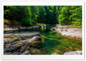 Mountain Forest Stream HD Wide Wallpaper for Widescreen