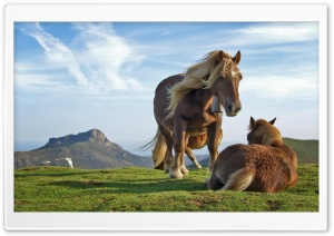 Mountain Horses HD Wide Wallpaper for Widescreen