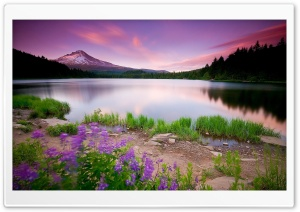 Mountain Lake And Flowers HD Wide Wallpaper for Widescreen