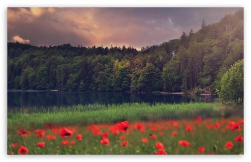 Mountain Lake Forest Landscape 4k Hd Desktop Wallpaper
