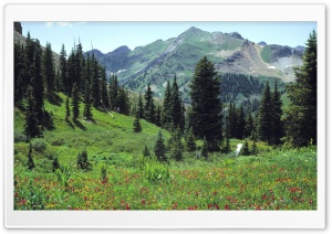 Mountain Meadow Flowers HD Wide Wallpaper for Widescreen