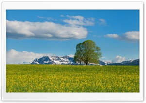 Mountain Meadow Spring HD Wide Wallpaper for Widescreen