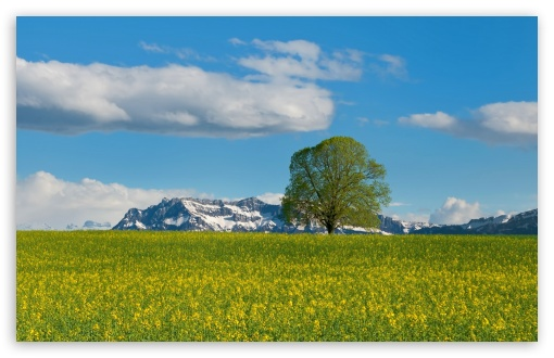 Mountain Meadow Spring ❤ 4K UHD Wallpaper for Wide 16:10 5:3 Widescreen WHXGA WQXGA WUXGA WXGA WGA ; 4K UHD 16:9 Ultra High Definition 2160p 1440p 1080p 900p 720p ; Standard 4:3 5:4 3:2 Fullscreen UXGA XGA SVGA QSXGA SXGA DVGA HVGA HQVGA ( Apple PowerBook G4 iPhone 4 3G 3GS iPod Touch ) ; Smartphone 5:3 WGA ; Tablet 1:1 ; iPad 1/2/Mini ; Mobile 4:3 5:3 3:2 16:9 5:4 - UXGA XGA SVGA WGA DVGA HVGA HQVGA ( Apple PowerBook G4 iPhone 4 3G 3GS iPod Touch ) 2160p 1440p 1080p 900p 720p QSXGA SXGA ;