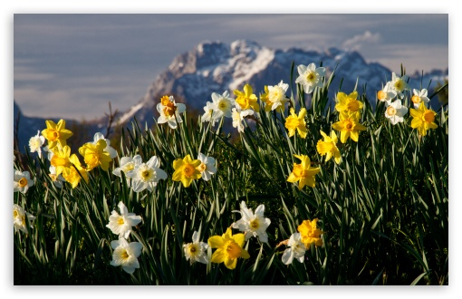Mountain Narcissus HD wallpaper for Wide 16:10 5:3 Widescreen WHXGA WQXGA WUXGA WXGA WGA ; HD 16:9 High Definition WQHD QWXGA 1080p 900p 720p QHD nHD ; UHD 16:9 WQHD QWXGA 1080p 900p 720p QHD nHD ; Standard 4:3 5:4 3:2 Fullscreen UXGA XGA SVGA QSXGA SXGA DVGA HVGA HQVGA devices ( Apple PowerBook G4 iPhone 4 3G 3GS iPod Touch ) ; Tablet 1:1 ; iPad 1/2/Mini ; Mobile 4:3 5:3 3:2 16:9 5:4 - UXGA XGA SVGA WGA DVGA HVGA HQVGA devices ( Apple PowerBook G4 iPhone 4 3G 3GS iPod Touch ) WQHD QWXGA 1080p 900p 720p QHD nHD QSXGA SXGA ; Dual 16:10 5:4 WHXGA WQXGA WUXGA WXGA QSXGA SXGA ;