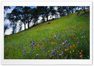 Mountain Spring Flowers HD Wide Wallpaper for Widescreen