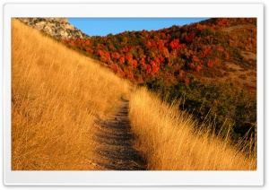Mountain Trail HD Wide Wallpaper for Widescreen