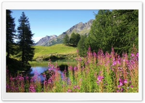 Mountain Wildflowers Field 4 HD Wide Wallpaper for Widescreen