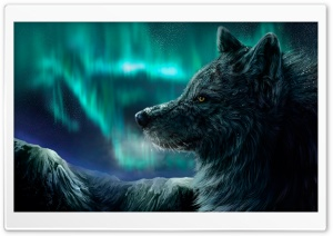 Mountain Wolf HD Wide Wallpaper for 4K UHD Widescreen desktop & smartphone