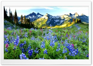 Mountains Flowers HD Wide Wallpaper for Widescreen
