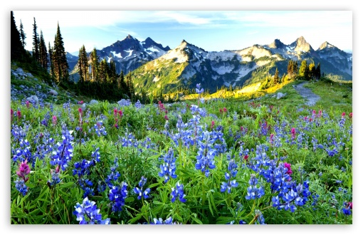 Mountains Flowers UltraHD Wallpaper for Wide 16:10 5:3 Widescreen WHXGA WQXGA WUXGA WXGA WGA ; 8K UHD TV 16:9 Ultra High Definition 2160p 1440p 1080p 900p 720p ; Standard 4:3 5:4 3:2 Fullscreen UXGA XGA SVGA QSXGA SXGA DVGA HVGA HQVGA ( Apple PowerBook G4 iPhone 4 3G 3GS iPod Touch ) ; Tablet 1:1 ; iPad 1/2/Mini ; Mobile 4:3 5:3 3:2 16:9 5:4 - UXGA XGA SVGA WGA DVGA HVGA HQVGA ( Apple PowerBook G4 iPhone 4 3G 3GS iPod Touch ) 2160p 1440p 1080p 900p 720p QSXGA SXGA ;