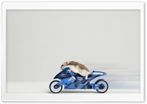 Mouse Riding Motorcycle HD Wide Wallpaper for Widescreen