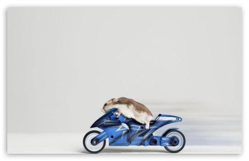 Mouse Riding Motorcycle ❤ 4K UHD Wallpaper for Wide 16:10 5:3 Widescreen WHXGA WQXGA WUXGA WXGA WGA ; 4K UHD 16:9 Ultra High Definition 2160p 1440p 1080p 900p 720p ; Standard 4:3 5:4 3:2 Fullscreen UXGA XGA SVGA QSXGA SXGA DVGA HVGA HQVGA ( Apple PowerBook G4 iPhone 4 3G 3GS iPod Touch ) ; Tablet 1:1 ; iPad 1/2/Mini ; Mobile 4:3 5:3 3:2 16:9 5:4 - UXGA XGA SVGA WGA DVGA HVGA HQVGA ( Apple PowerBook G4 iPhone 4 3G 3GS iPod Touch ) 2160p 1440p 1080p 900p 720p QSXGA SXGA ;