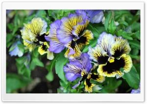 Multi-Colored Flowers Ultra HD Wallpaper for 4K UHD Widescreen desktop, tablet & smartphone