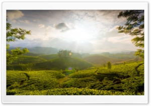 Munnar Hill, India HD Wide Wallpaper for Widescreen