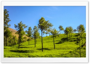 Munnar Hills HD Wide Wallpaper for Widescreen