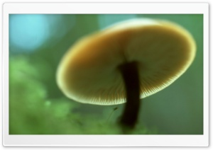 Mushroom Ultra HD Wallpaper for 4K UHD Widescreen desktop, tablet & smartphone
