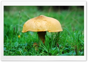 Mushroom HD Wide Wallpaper for Widescreen