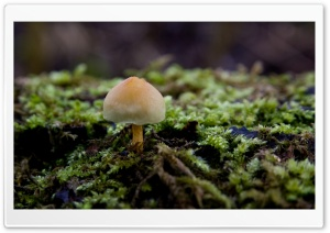 Mushroom And Moss HD Wide Wallpaper for Widescreen