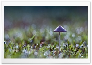 Mushroom Bokeh HD Wide Wallpaper for Widescreen