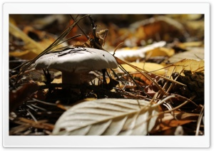 Mushroom Fall HD Wide Wallpaper for Widescreen